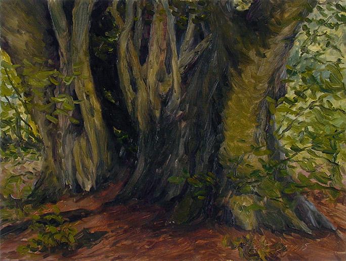Painting of Beech Tree (Rassler Wood Tree)