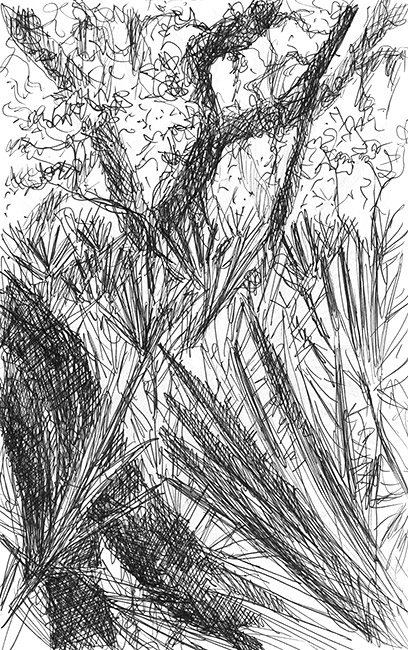Drawing of Maritime Forest