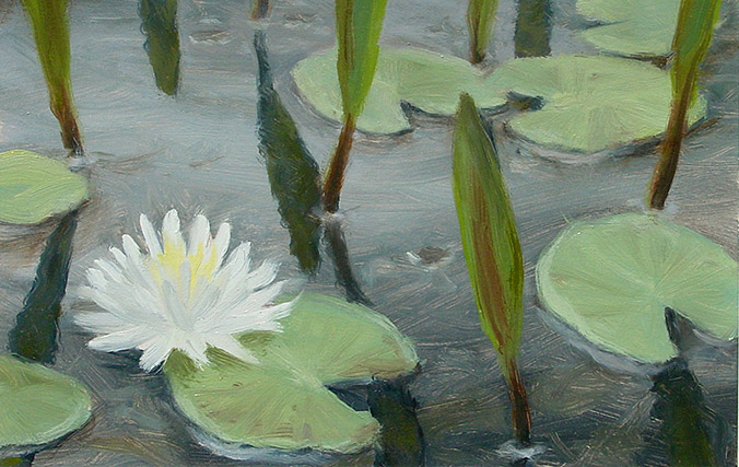 Painting of Water Lily and Never Wet
