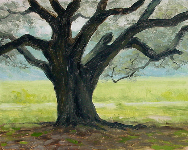 Painting of Live Oak by a Field