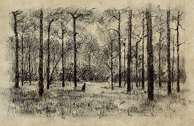 Drawing of Longleaf - Wiregrass by Philip Juras