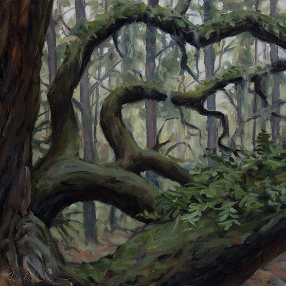 Painting of Live Oak Branches