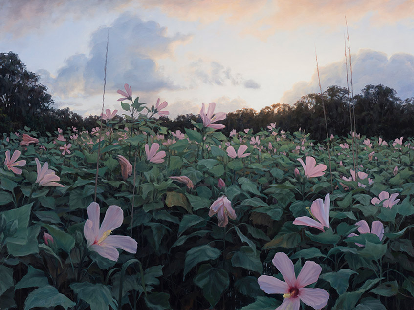 Painting of Flag Pond Hibiscus