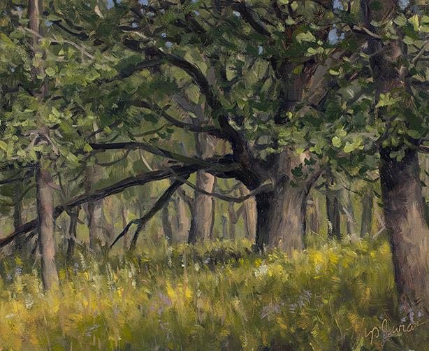 Painting of Old Bur Oak, Deer Grove, Illinois